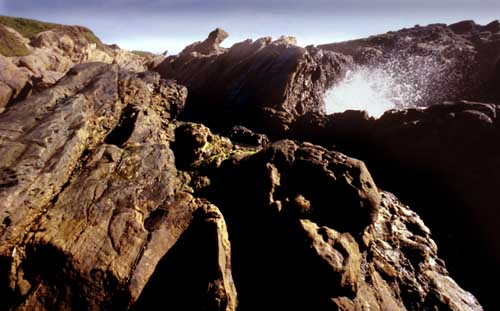 Point Lobos image 1